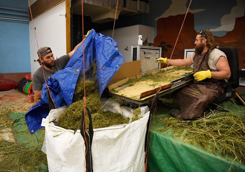 GettyImages 866829018 Could hemp plastic save our planet?