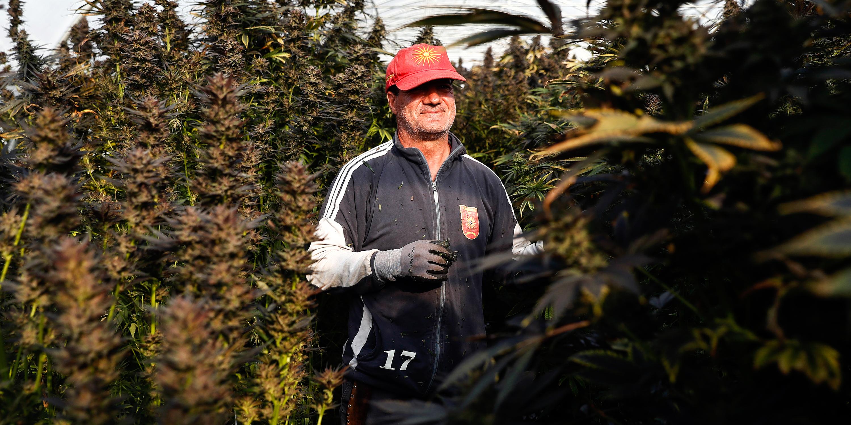Schweiz Cannabis Legal