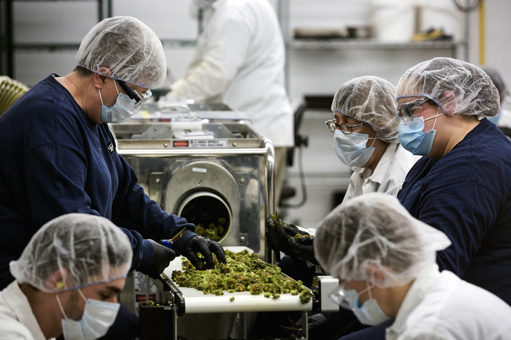 GettyImages 899559492 The 10 best cannabis jobs you probably havent considered