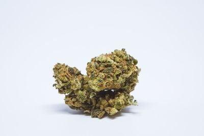 Tangilope Weed; Tangilope Cannabis Strain; Tanglilope Sativa Marijuana Strain