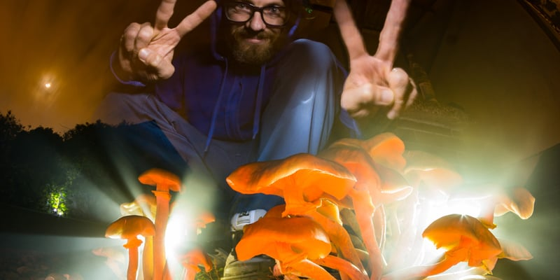 New Study Traces Why Psilocybin Mushrooms Evolved To Be Psychedelic