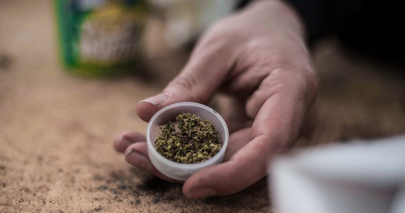 post-image-Time does impact cannabis' freshness and quality, according to experts,