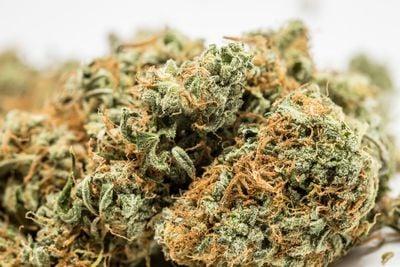 BC Sweet Tooth Weed; BC Sweet Tooth Cannabis Strain; BC Sweet Tooth Indica Marijuana Strain