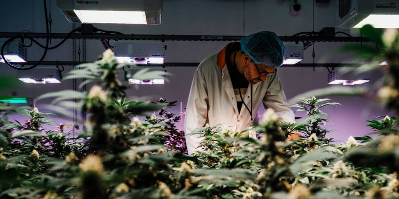 aquaponics is the future of growing weed the electrum report