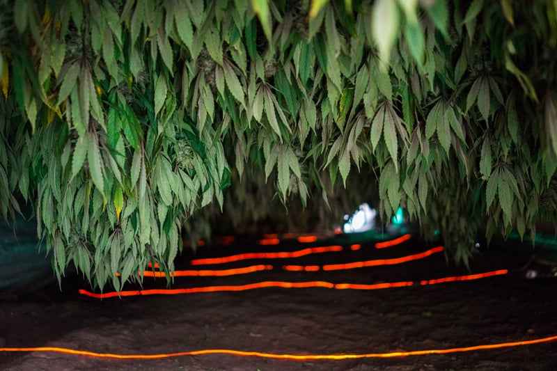 Nicolas Enriquez Marijuana   13 Photographer captures the tranquil life inside The Lost City Of Marijuana