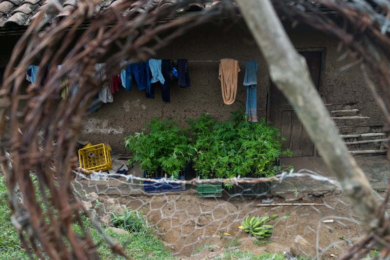Nicolas Enriquez Marijuana   25 Photographer captures the tranquil life inside The Lost City Of Marijuana