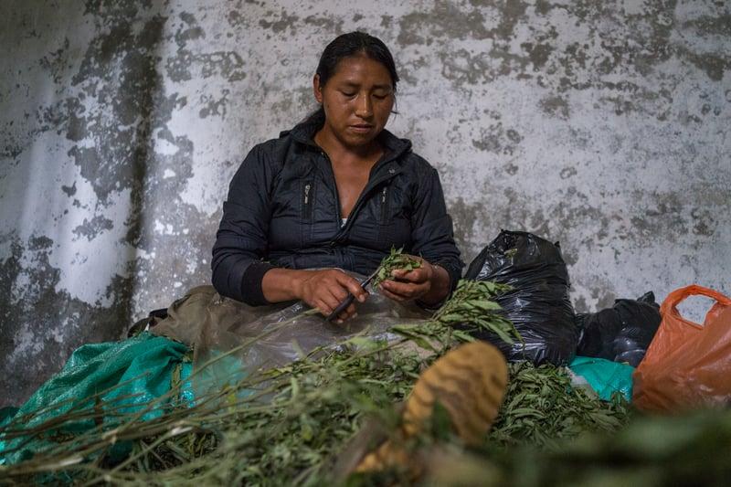 Nicolas Enriquez Marijuana   30 Photographer captures the tranquil life inside The Lost City Of Marijuana
