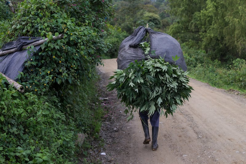 Nicolas Enriquez Marijuana   37 Photographer captures the tranquil life inside The Lost City Of Marijuana