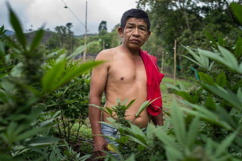 Nicolas Enriquez Marijuana   9 Photographer captures the tranquil life inside The Lost City Of Marijuana