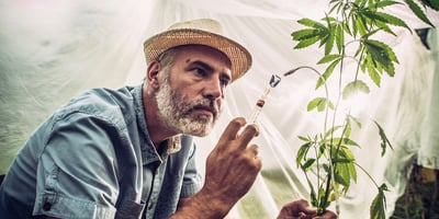 Portrait of Cannabis farmer apply chemical modification to plant. The question many are asking is are weed strain names legit?