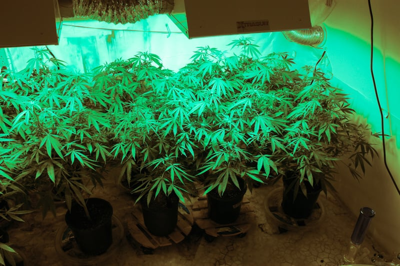 How to Grow Weed in Your Apartment 3 How To Grow Weed In Your Apartment