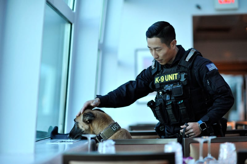Illinois Cops Claim If Weed Is Legalized Theyll Have To Kill Their Police Dogs 2 Illinois police claim that cannabis legalization will force them to euthanize K 9 police dogs