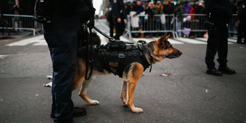 Illinois Cops Claim If Weed Is Legalized, They'll Have To Kill Their Police Dogs