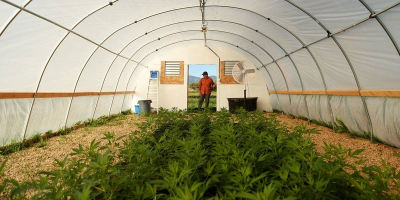 Senate Passes Promising Resolution For Hemp Legalization
