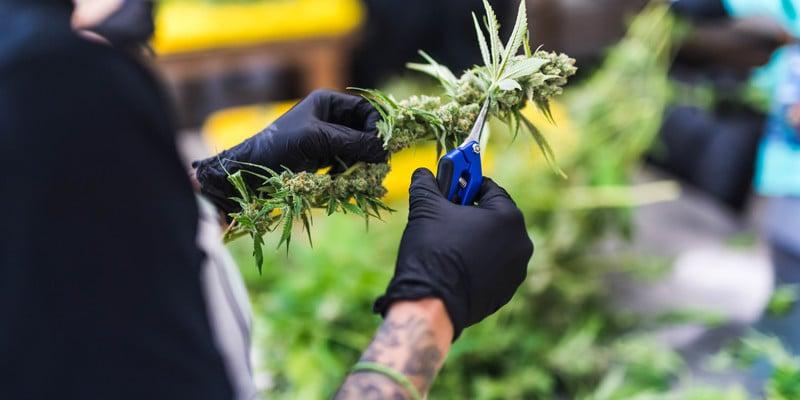 https://herb.co/marijuana/news/calgrowers-sues-california-cannabis-cultivation-licenses/