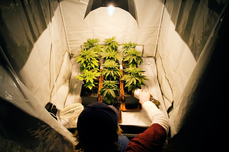uncropped House rejects 13 amendments including home grow ban Canada Rejects Cannabis Act Amendment To Ban Home Growing